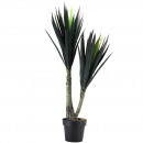 Yucca potted 115cm height, green